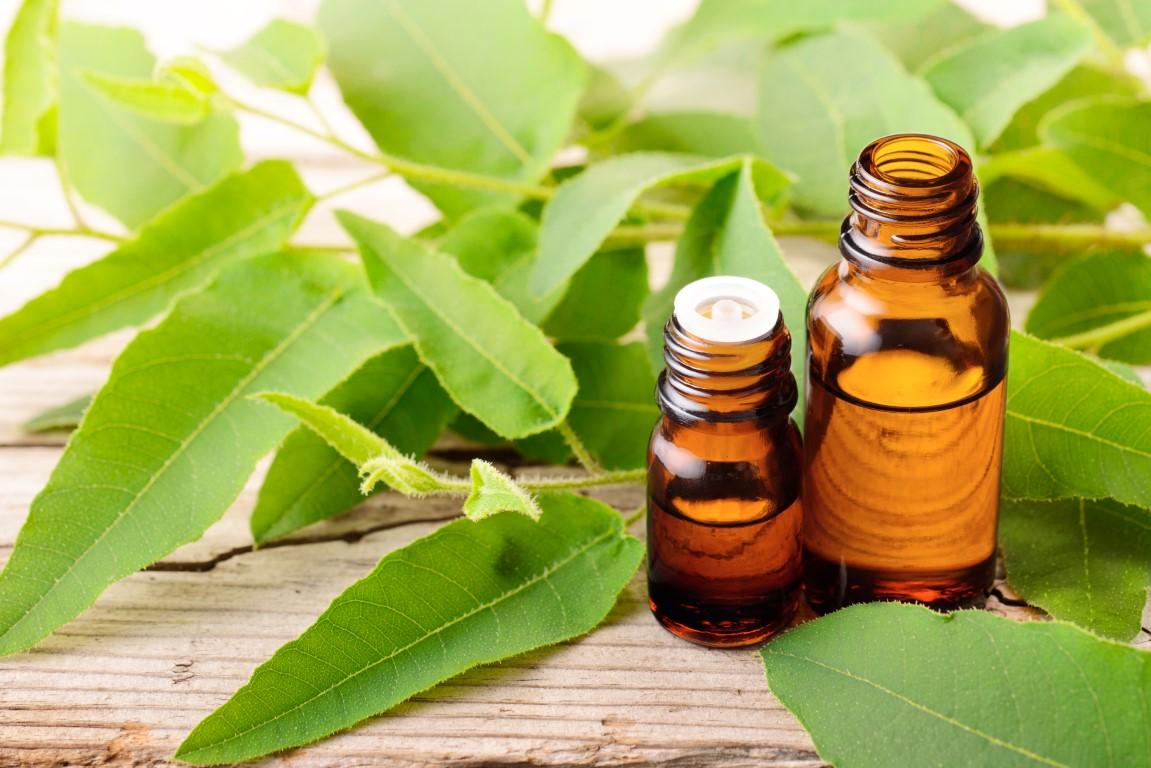 huile essentielle Eucalyptus citronné contre infection urinaire