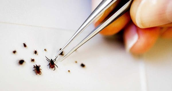 Piqûres d'insectes : comment les prévenir et les traiter