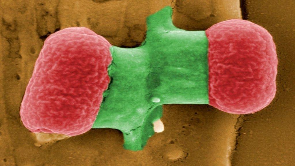 bacteria resistencia antibióticos